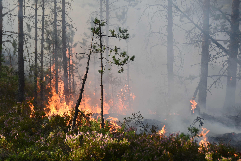 Karta Over Skogsbrander I Sverige.Fortsatt Stod Med Slackningsarbetet I Sverige Storstockholms